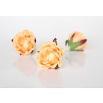 Полиантовые розы - Персиковые, 1 шт.