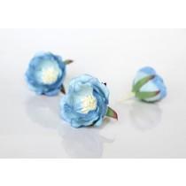 Полиантовые розы - Голубые 2хтоновые, 1 шт.
