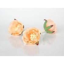 Полиантовые розы - Персиковые 2хтоновые , 1 шт.
