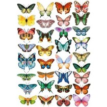 Оверлей Бабочки цветные 21х29,7 см