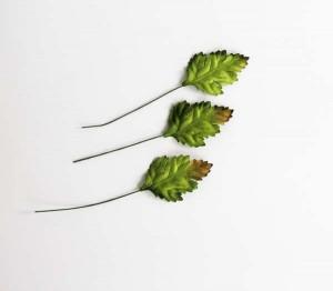 Листья шиповника зеленые, 1 шт